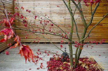 Bild zu Sichtschutz für Garten